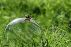 Snail walking across the top of a shimmering bubble with a background of green grass.